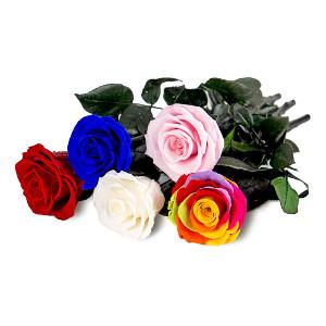 Evighetsrosor som håller länge - Blommor i present